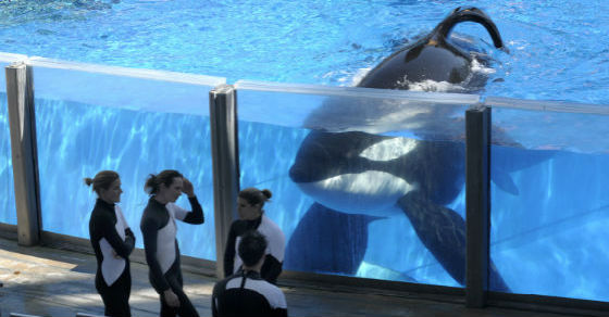 Incidents At Seaworld Parks: SeaWorld: Free The Orcas!